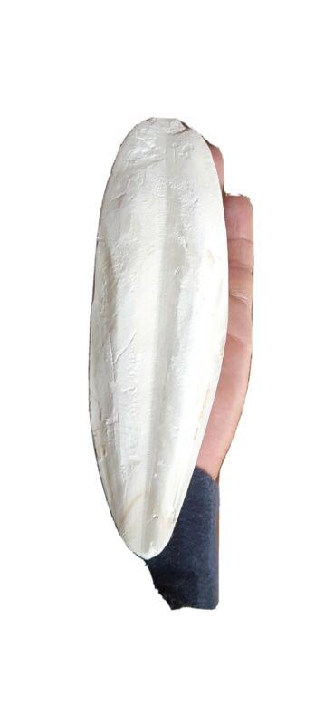 1 bag of 8 large Cuttlebones