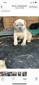 1 puppy left for sale