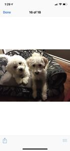 Looking for a forever home for our 2 Dogs