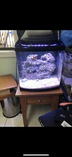 Wanted: Marine aquarium 80L + table + test kit + nemo