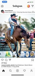 Wanted cheap 2-5 year old Broncs