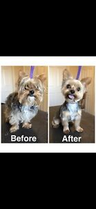 Certified Dog Groomer SW/NW Area