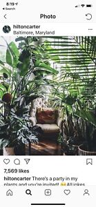 Wanted house plants