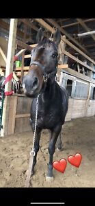 16hh started project horse