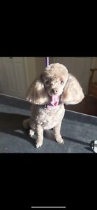 Certified Dog Groomer NW/SW Area