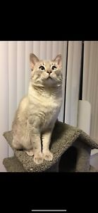 Male cat for rehoming
