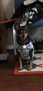 Dog sitter in my home starting at $15. a day