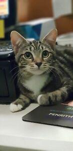 Gorgeous rescue kitten - female