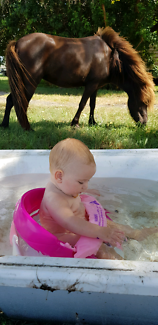 Sweet little mini mare