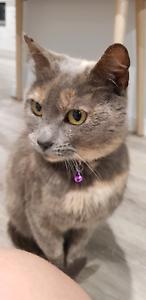 Female cat around 5 years