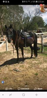 QHorse mare