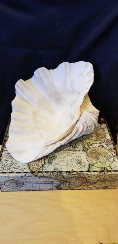 Beautiful Medium Natural Clam Shell Sea Ocean Tridacna Gigas Large Seashell