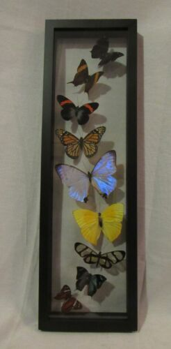Framed Peruvian butterfly display - 9 elegant and colorful species with morpho!