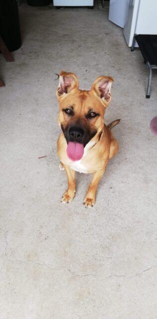 Free to GOOD home | Dogs & Puppies | Gumtree Australia