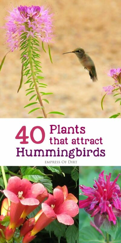 Flowers For Hanging Baskets That Attract Hummingbirds : Plants that attract hummingbirds