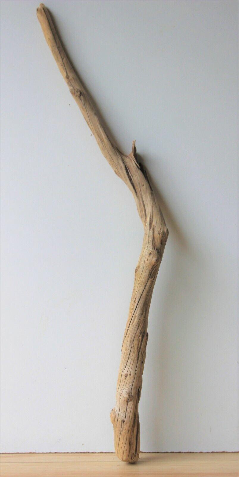 Treibholz Schwemmholz Driftwood 1 XL Ast Terrarium