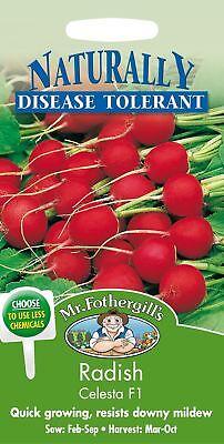 500 Seeds Pictorial Packet Radish Prinz Rotin Mr Fothergills Vegetable
