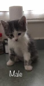 4 kittens good to go to homes next Friday!