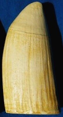 Whale Tooth (IMITATION REPLICA) Scrimshaw, Engraving #6