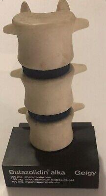 Vtg 3d Anatomical Model Of Human Spine Geigy Butazolidin Alka Salesmens Sample