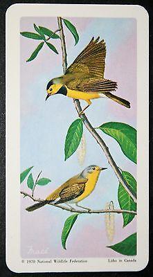 Bachman's Warbler          Illustrated Vintage Card  # VGC