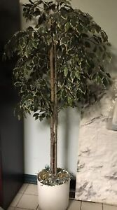 Artificial Silk Ficus tree (6ft artificial Palace Style)