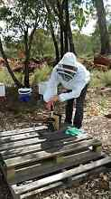 Looking for central Perth garden or rooftop space for bee hive Perth CBD Perth City Preview