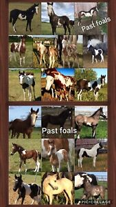 Package deals and 2019 foals