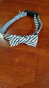 Dog collar and lead set Maitland Maitland Area Preview