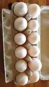 Duck Eggs, per dozen, farm fresh, Harvey Harvey Area Preview