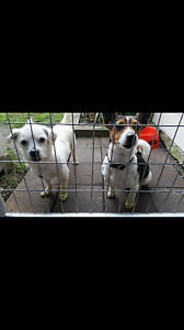 Missing dogs Maitland Maitland Area Preview