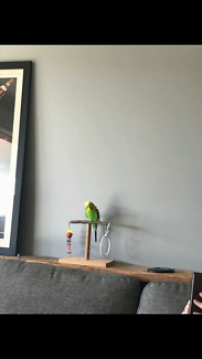 LOST BUDGIE