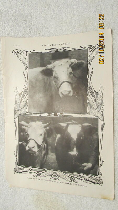 Vtg. Photos of Cattle Cows at 1903 International Livestock Exposition in Chicago