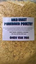ANIMAL BEDDING, FEED DELIVERY ALPACAS,CHICKENS,COWS,DONKEYS,DUCK Mudgeeraba Gold Coast South Preview