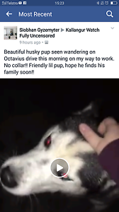 Dog Missing -Please help and keep on a lookout Petrie Pine Rivers Area Preview