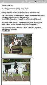 2 horses offered for sale,  details in photos. Mansfield Mansfield Area Preview