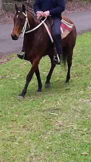 Only Foolin Around QH Mare Port Macquarie 2444 Port Macquarie City Preview