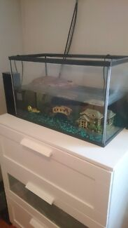 Baby turtles and tank  Devon Park Port Adelaide Area Preview