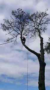 PALM PRUNING SPECIALS B4 XMAS FROM $50!! Bankstown Bankstown Area Preview