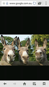 Donkey wanted East Branxton Cessnock Area Preview