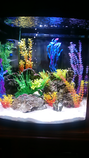 Marine tank fully set up with chiller