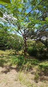 Costa Rica lot