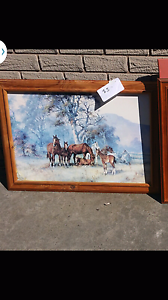 picture horse Glenroy Moreland Area Preview