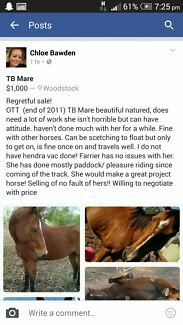 Horse for sale Woodstock Townsville Surrounds Preview