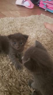 Adorable Kittens for Christmas