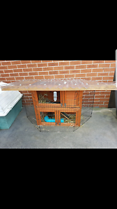 2 GUINEA PIGS AND HUTCH Bondi Junction Eastern Suburbs Preview
