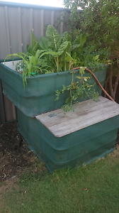 IBC Aquaponics Baldivis Rockingham Area Preview