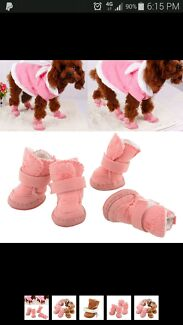 Pug/ Puppy/ boston terrier/ ugg boot  Seaford Frankston Area Preview