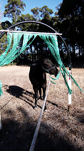 Does you horse need ground work? Manjimup Manjimup Area Preview