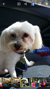Lost  dog airport west area Airport West Moonee Valley Preview